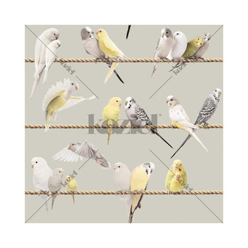 Lovebirds Warm Grey 8888-406
