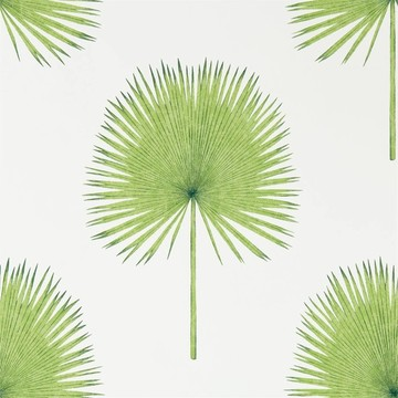 Fan Palm Botanical Green 216636