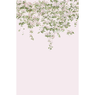 Clematis Mural Pink