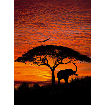 African sunset 4-501