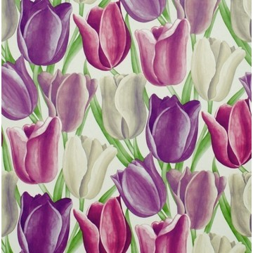 Early Tulips Purple/Plum DVIWEA101