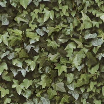 Ivy wall 8888-401